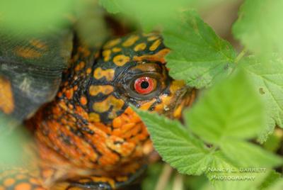 turtle (16)