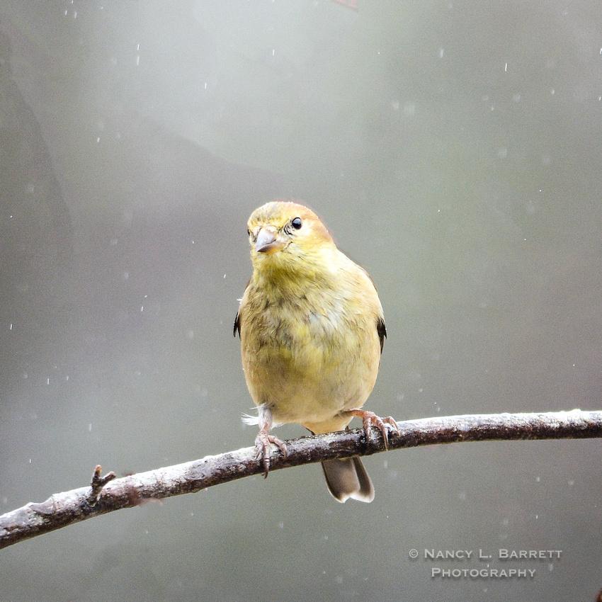 Winter Birds-5623-Edit4 1x1 300