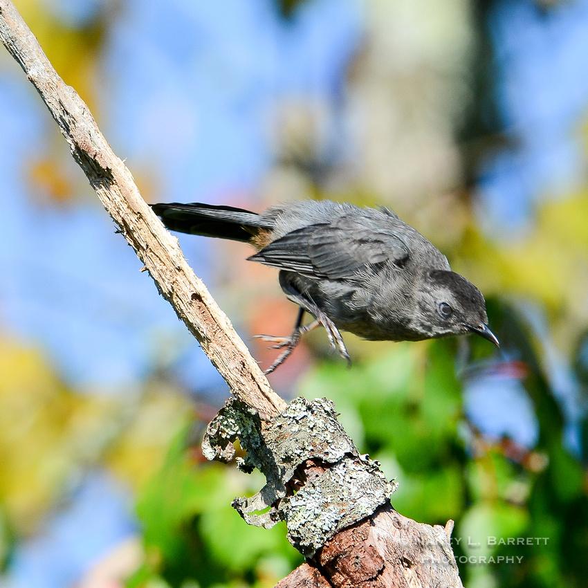 Summer Birds-91 1 1