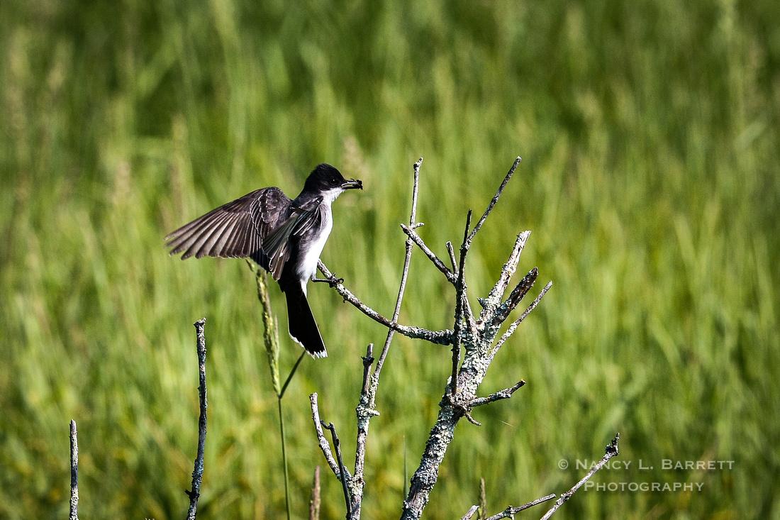 Spring Birds-234 MOD 3 2