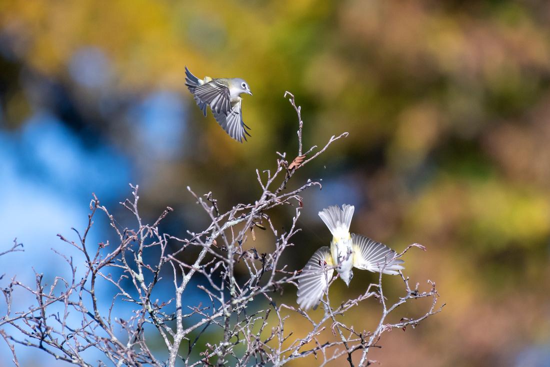 Bird Walk 101519-19